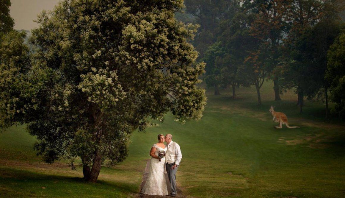 amazing kangaroos at top wedding portrait location golf club nelson bay