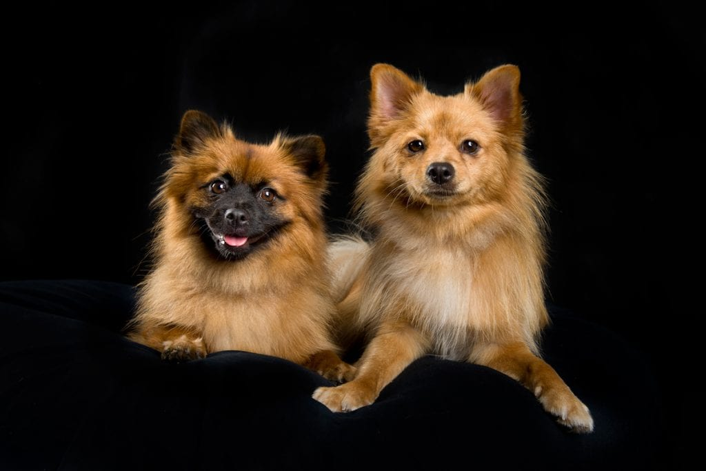 Get on a dogs eye level is one of the professional dog photographer tips you can read